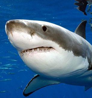 extincion-tiburon